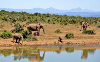 South Africa Safari Tour // 2018